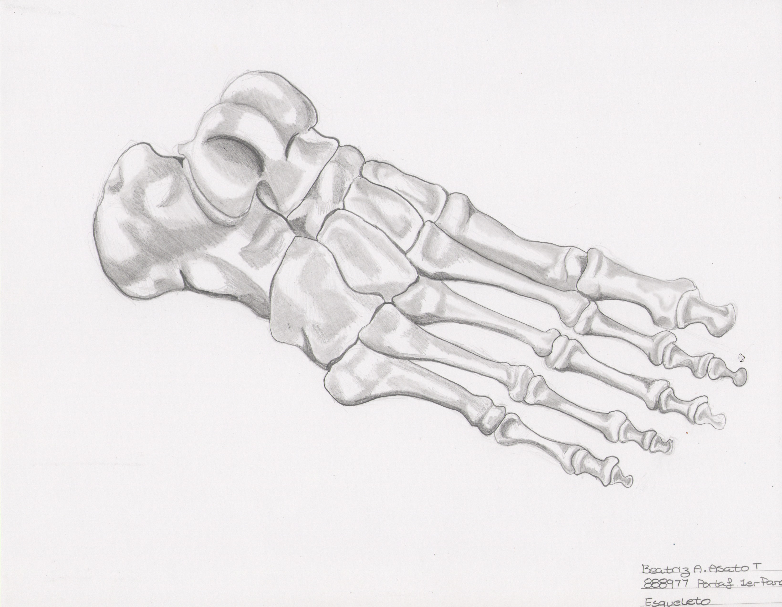 Dibujos a lápiz: Huesos – Beatriz Asato