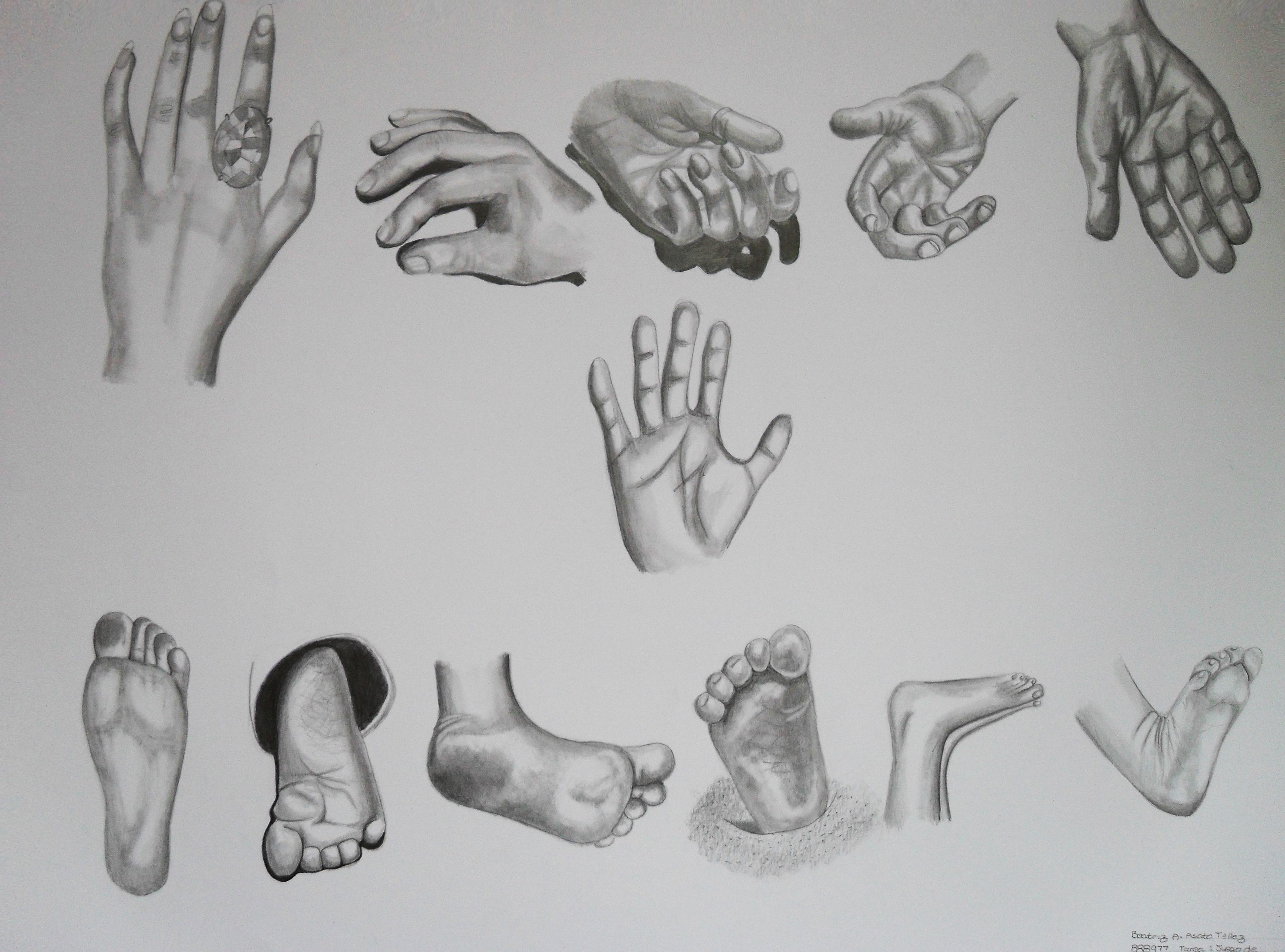 Serie de Manos y Pies Dibujo a Lapiz  Beatriz Asato
